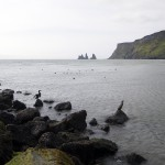 Cormorans sur la plage de Vik et Reynisdrangar en fond, Islande
