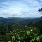 Forêt équatoriale du Parc National Taman Negara en Malaisie
