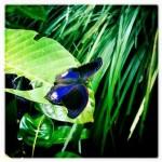 Papillon dans le parc de Taman Negara en Malaisie - Trace Ta Route