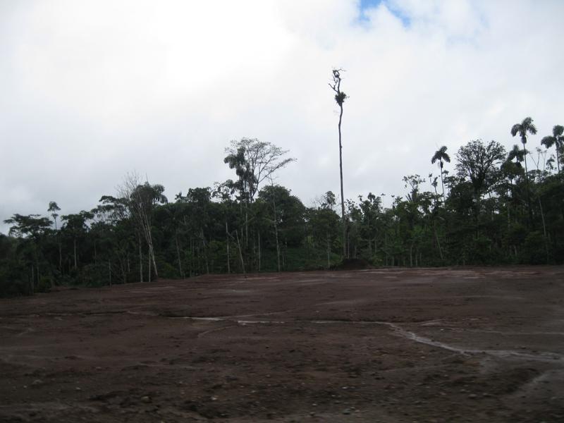 Déforestation en Amazonie, Equateur - Trace Ta Route Blog Voyage
