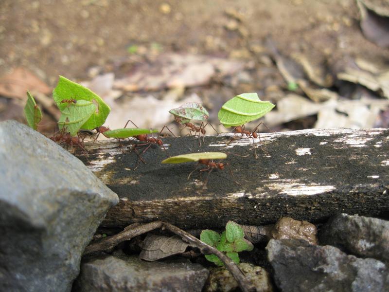 Fourmi rouges en plein boulot, Amazonie, Equateur - Trace Ta Route Blog Voyage