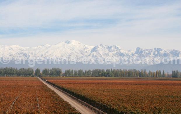 Argentine : le Cuyo près de Mendoza - Trace Ta Route