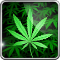 logo application mobile my ganja live wallpaper