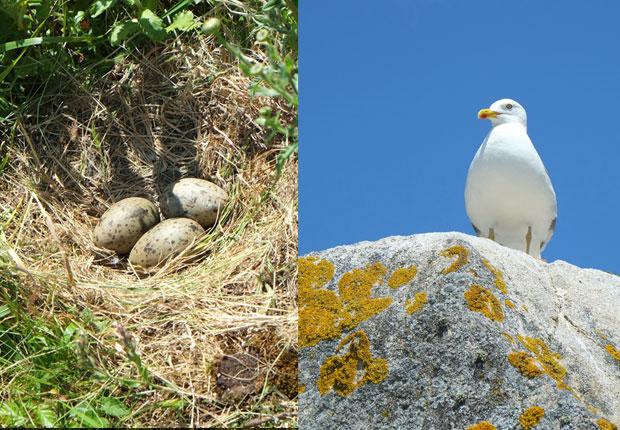Le nid...et la sentinelle !