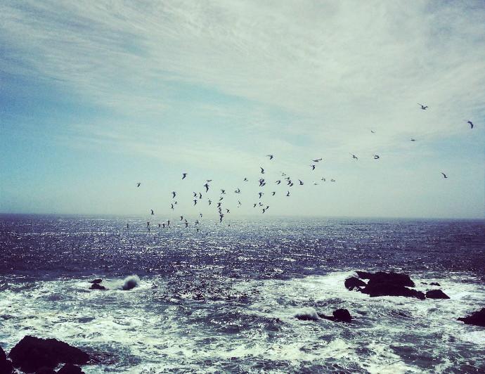 océan pacifique oiseaux valparaiso blog voyage trace te route