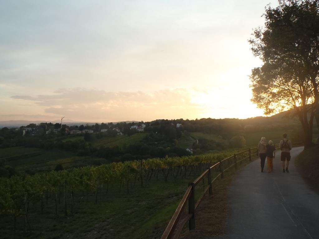 vignes autour de Vienne