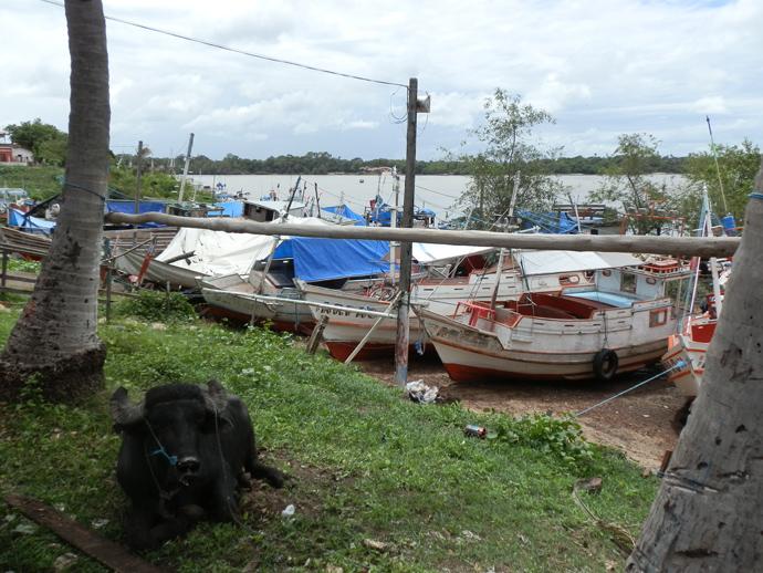buffle port soure à marajo au brésil - blog voyage trace ta route