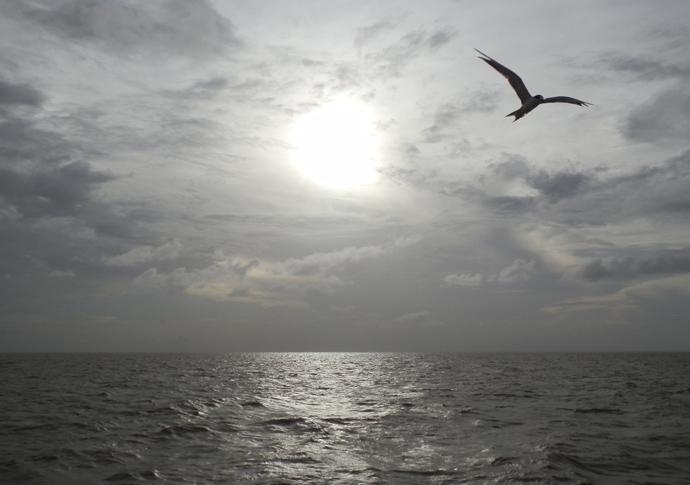 oiseau marajo amazonie brésil - blog voyage trace ta route