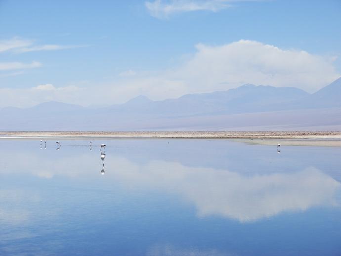 réserve los flamencos san pedro de atacama flamands roses montagnes reflection blog voyage trace ta route