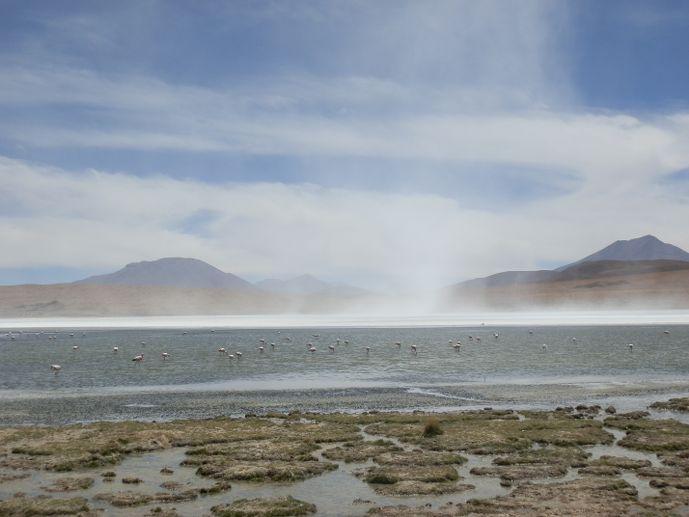 laguna hedionda sud lipez uyuni bolivie - blog voyage trace ta route