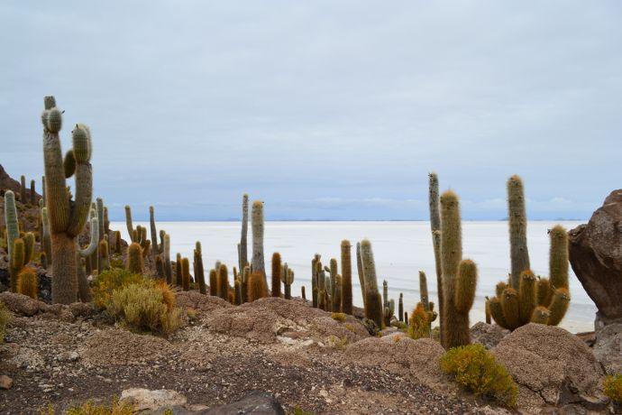 cactus salar d'uyuni bolivie blog voyage trace ta route