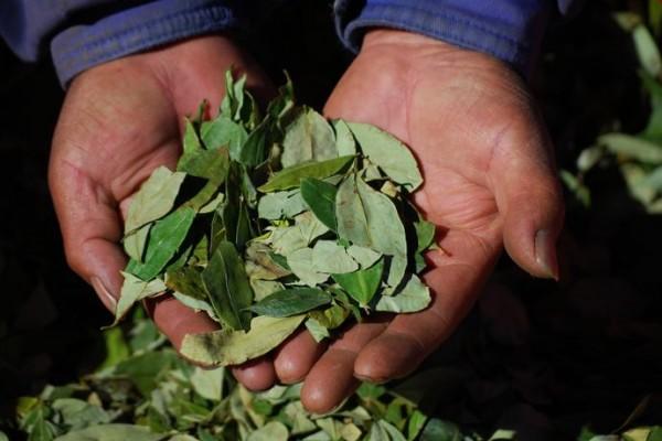 mains feuilles de coca bolivie blog voyage trace ta route