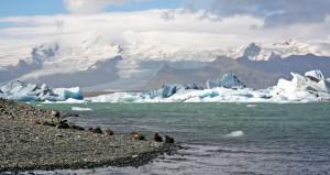 Canards dans le lagon de Jokulsarlon, Islande