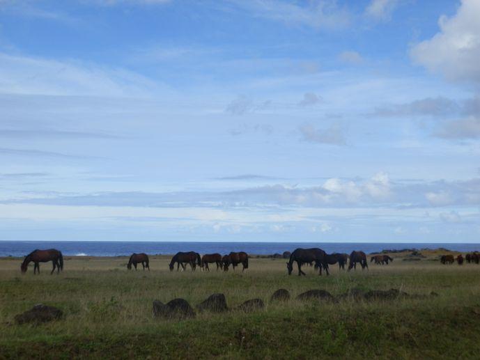 chevaux semi sauvages île de pâques blog voyage trace ta route
