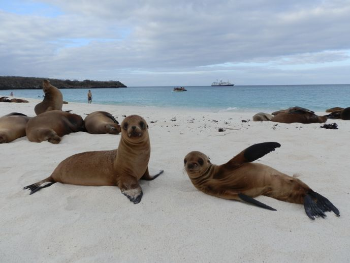 otaries des galapagos blog voyage trace ta route