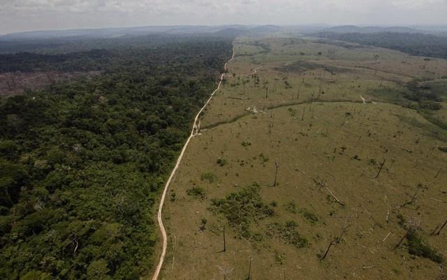 citoyen du monde ? déforestation en amazonie de la forêt brésilienne