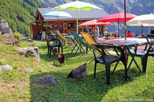 Les poules du Chalet du Boret