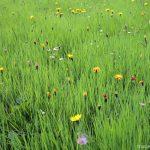 All-over d'herbes et de fleurs sous le Lac de la Vogealle - édouard photographie © Trace Ta Route
