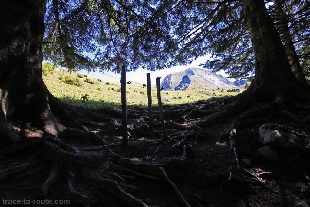 Sentier randonnée Charvin