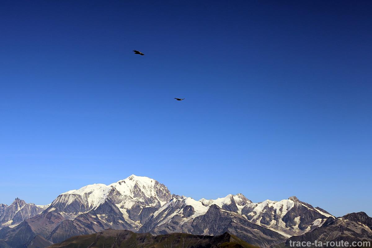 Couple de vautours fauves avec le Mont Blanc en fond