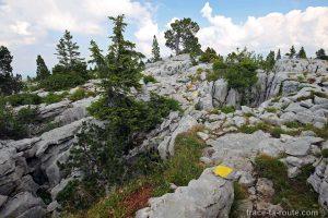 Sentier de randonnée à travers les lapiaz sur le Plateau du Parmelan