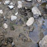 Empreintes de biches dans la Fontaine du Tour, au Parmelan