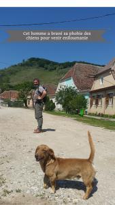 Chiens errants - Roumanie