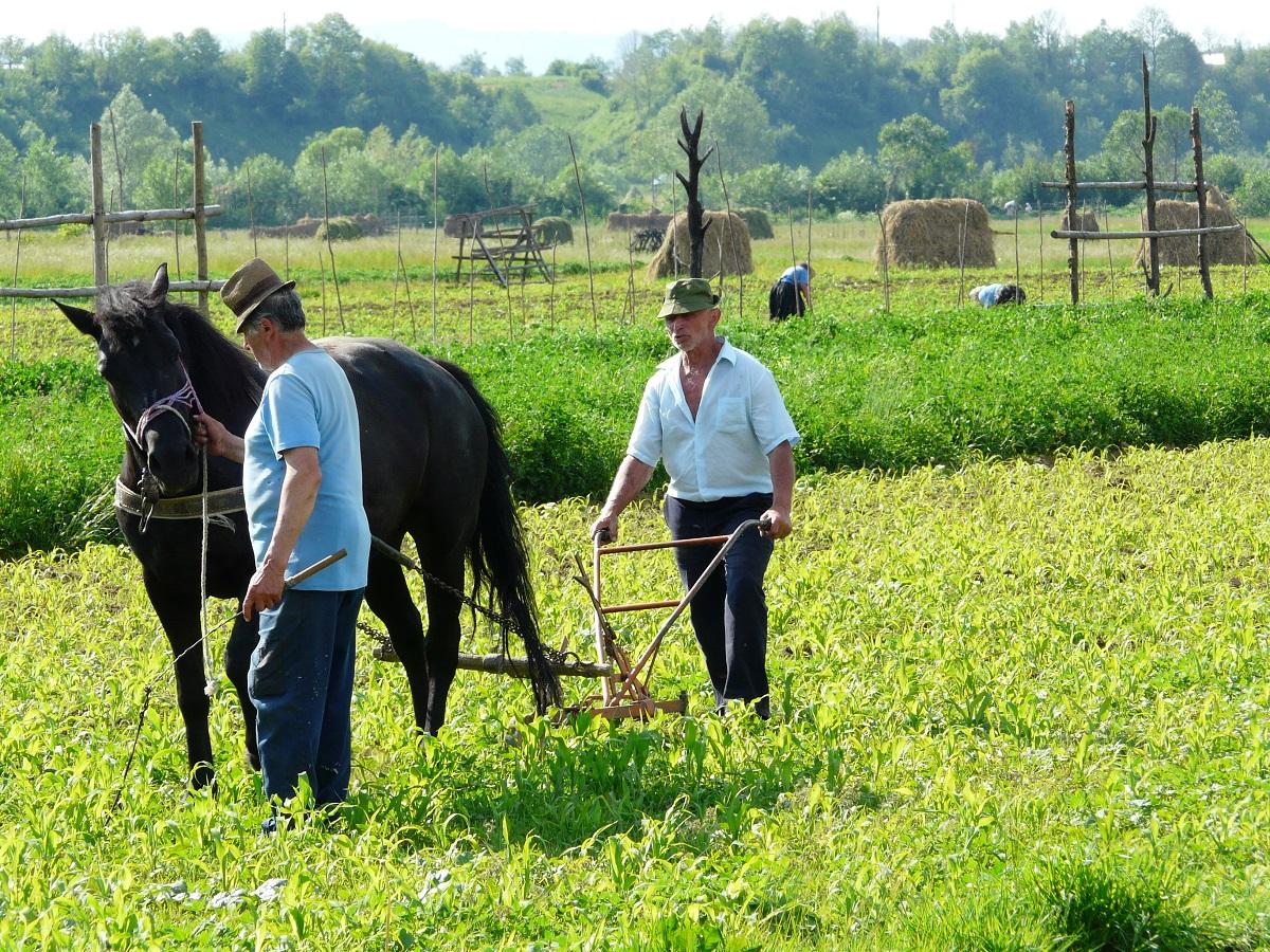 labour - maramures - Roumanie