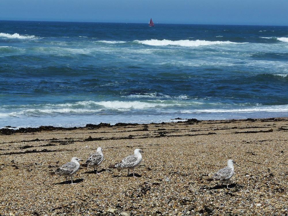 Porto et les plaisirs du bord de mer