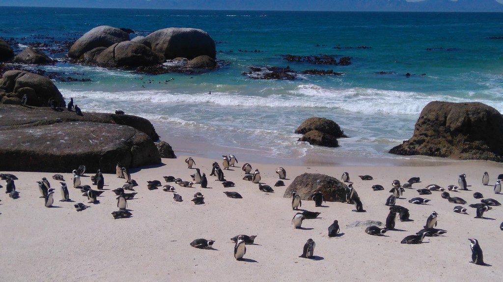 afriquedusud-boulder-beach1