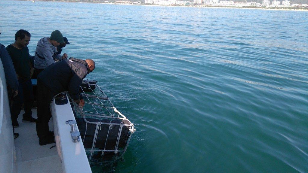afriquedusud-mossel-bay-port-requin-cage1