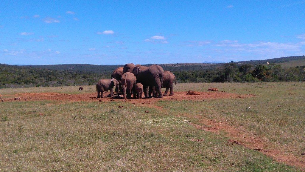 afriquedusud-port-elizabeth-addo-elephant-park-familly