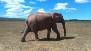 afriquedusud-port-elizabeth-addo-elephant-park4