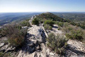 Thym et romarin sur le chemin de crête des Costes Chaudes sur la Montagne Sainte-Victoire - Réserve Naturelle de Sainte-Victoire