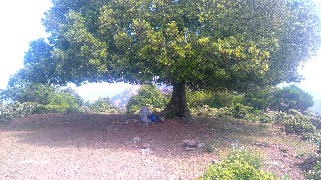 Pause déjeuner, entre Galeria et Girolata, sur le Tra Mare e Monti, randonnée Corse