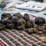 Truffes Savini Tartuffi Forcoli, Palaia (Valdera) Gastronomie Toscane, Italie
