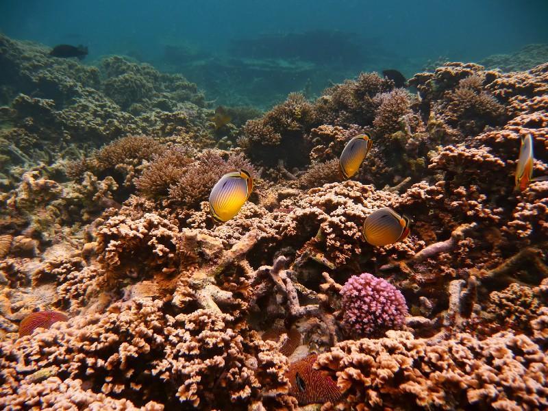 snorkeling à l'île maurice a la pointe aux piments - blog voyage trace ta route