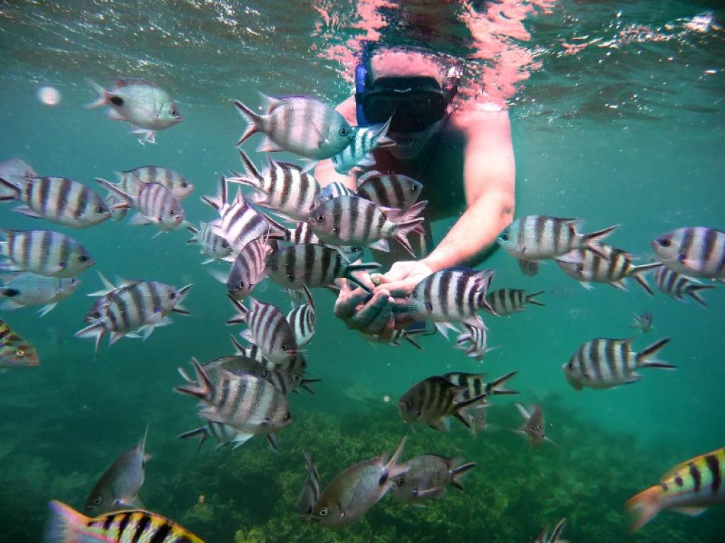 snorkeling à lîle maurice, le jardin de corail de blue bay - blog voyage Trace Ta Route