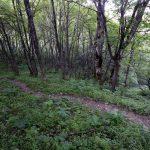 Chemin de la Petite Vache depuis le Col des Charmilles - Massif de la Chartreuse
