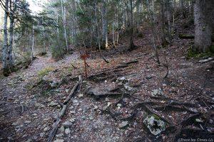 Sentier sous-bois randonnée Mont Colombier par La Fullie, Massif des Bauges