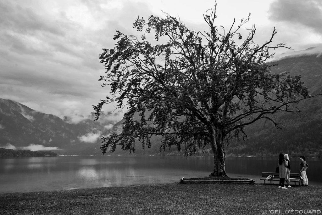 Lac de Bohinj, Slovénie - Bohinj Lake, Slovenia / Ribčev Laz, Bohinjsko jezero, Slovenija © L'Oeil d'Édouard