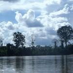 Forêt tropicale du parc de Taman Negara en Malaisie