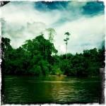 Parc Taman Negara en Malaisie - Trace Ta Route