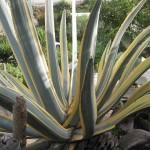Grand cactus au Musée Intiñan, Equateur - Trace Ta Route - Blog voyage