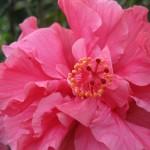 Fleur tropicale prise au Musée Intiñan, Equateur - Trace Ta Route - Blog voyage