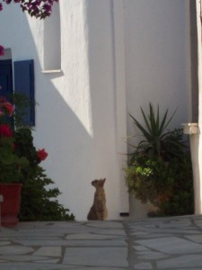 Chat dans les Cyclades - blog voyages