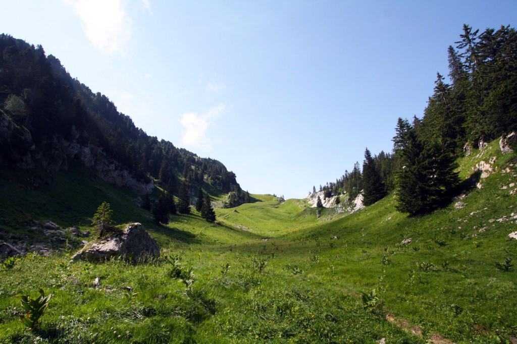 Clairière au Col du Bovinant, Le Grand Som, Massif de la Chartreuse