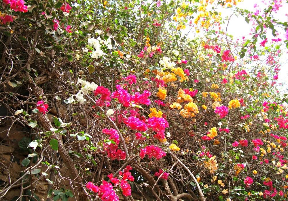 Massif de fleurs le de gor e blog voyage trace ta route - Massif de fleurs photos ...