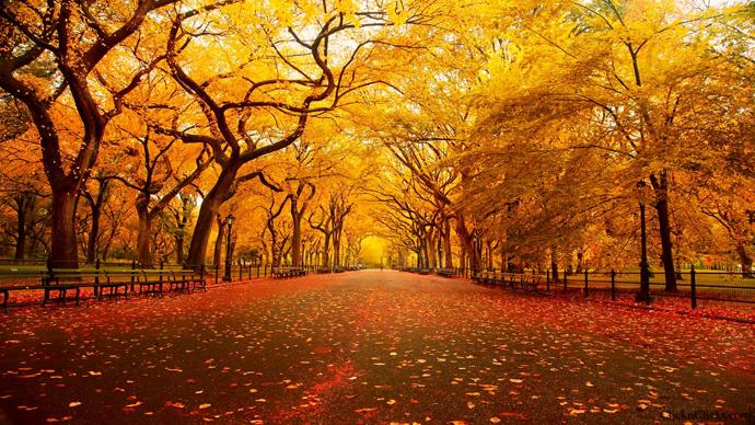 central park automne arbre jaune feuilles rouges blog voyage trace ta route