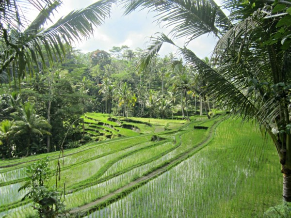 Rizieres du Gunung Kawi à Tampaksiring, Bali